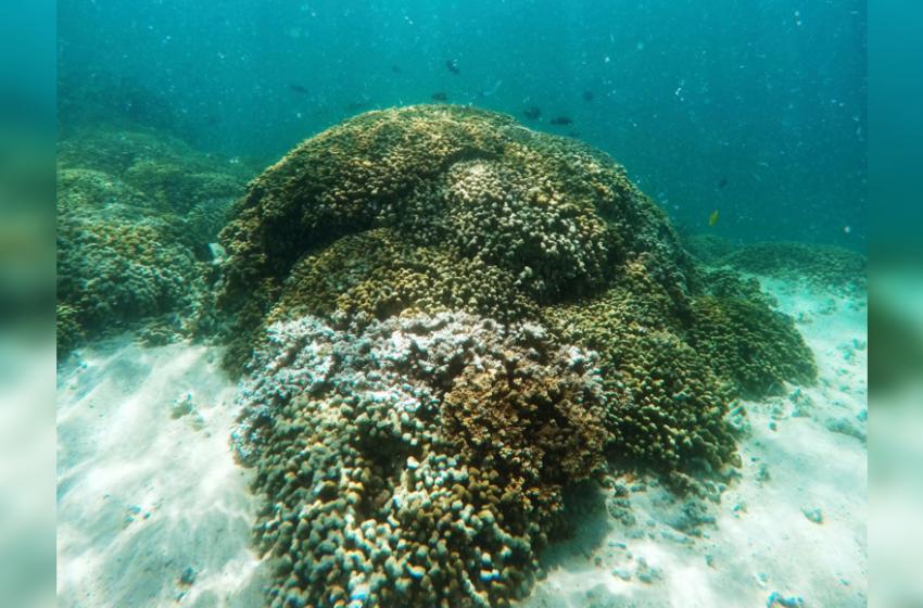 Global warming's extreme rains threaten Hawaii's coral reefs