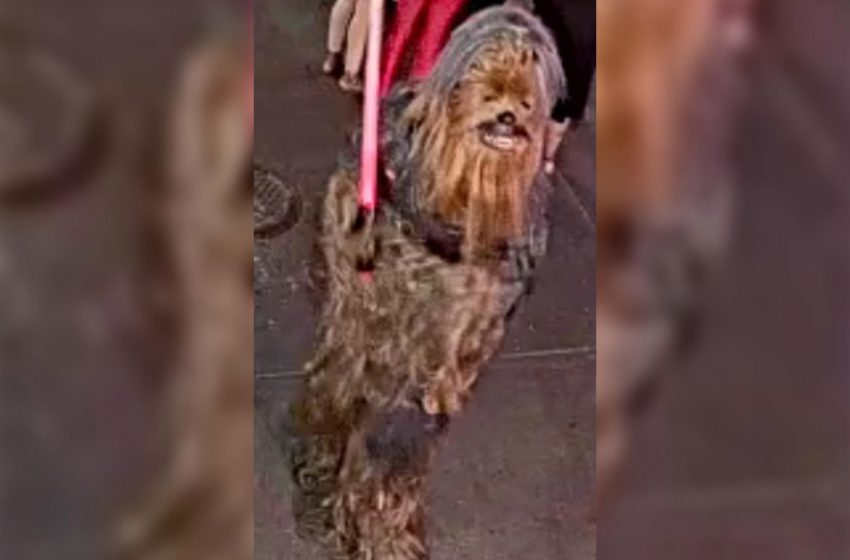 Man in Chewbacca costume wanted for stabbing in New Orleans
