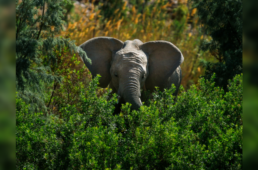 Elephants 'trample' rhino poacher to death in South African park