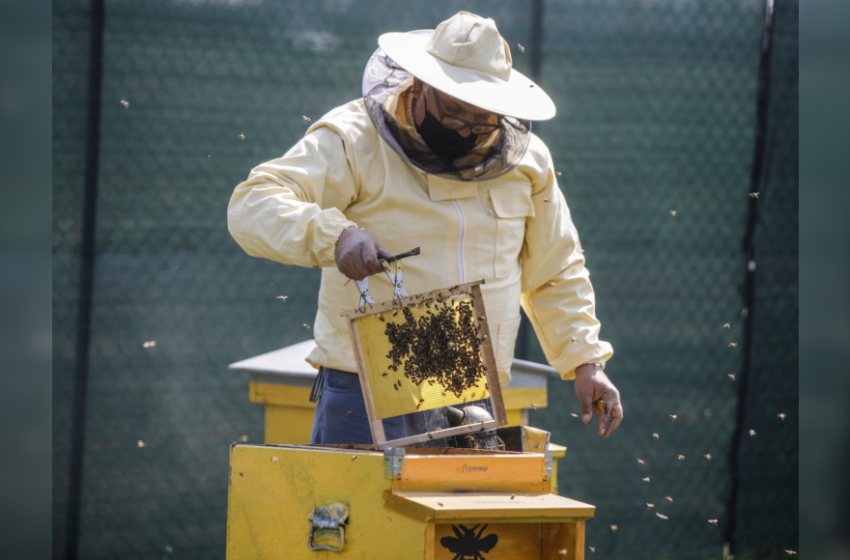 Milan gets buzzier with 1 million bees in designer hives