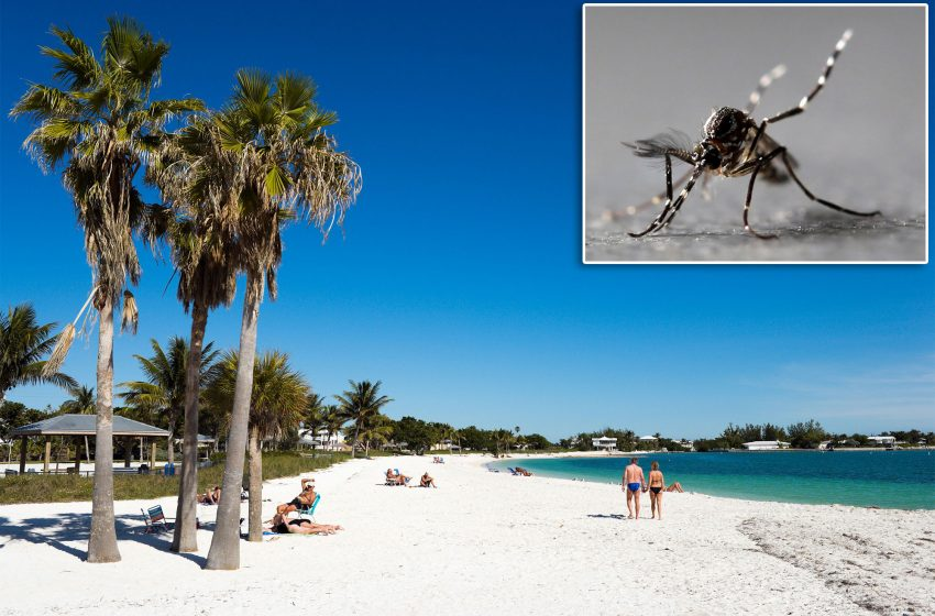 Thousands of genetically modified mosquitoes being released in Florida