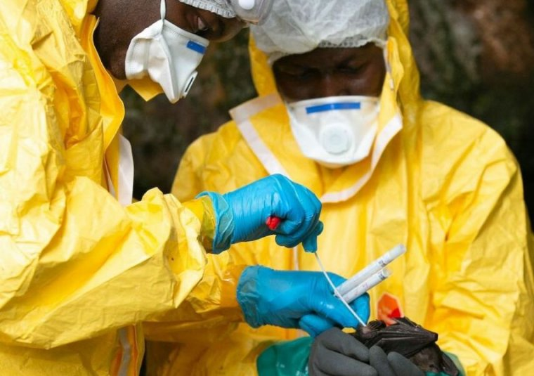 Want to worry about the next pandemic? Spillover.global has you covered