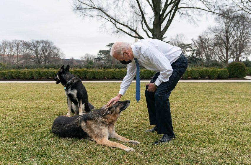 Bidens bringing cat into White House despite biting-dog drama