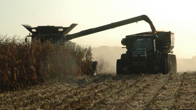 Increasing corn prices have far-reaching economic impact | Land & Livestock Post