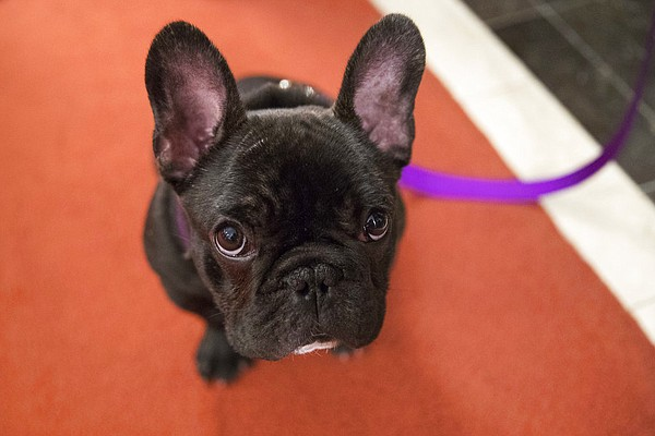 Authorities: Puppy sales were scam