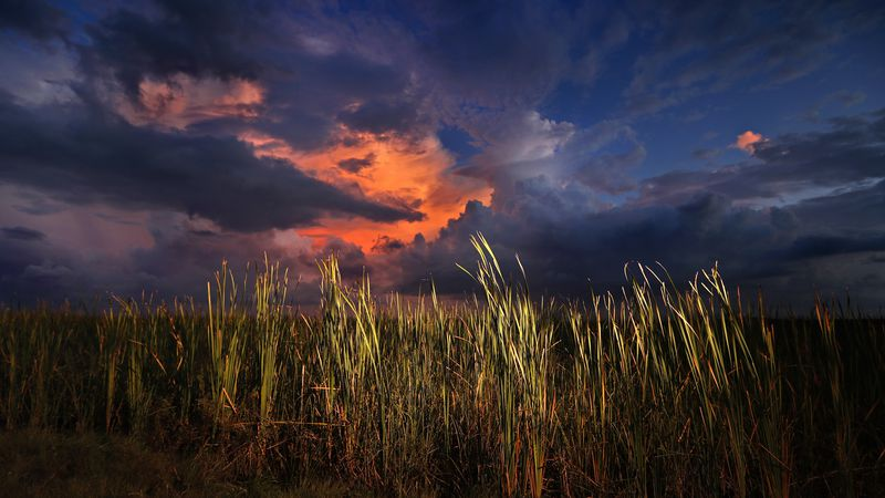Everglades restoration enhances water quality and benefits Florida's real estate industry