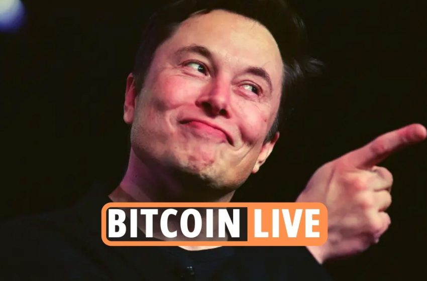 Bitcoin price LIVE – Crypto market comeback STALLS as Ethereum, Dogecoin and Cardano plunge amid Elon Musk memes