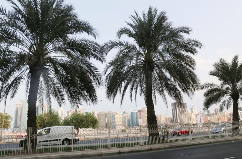 Space agency completes hi-tech survey of palm trees in Bahrain