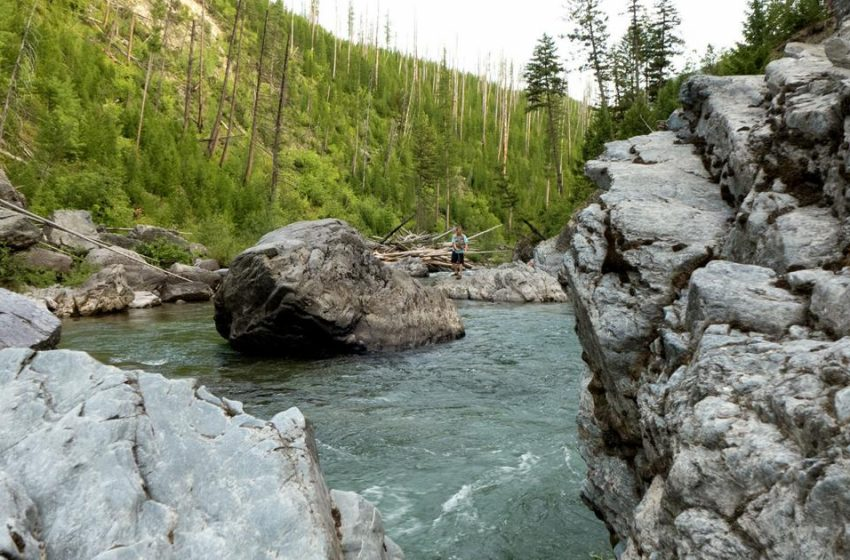 Group's challenge approval of Scapegoat trout kill, restocking plan | 406 Politics