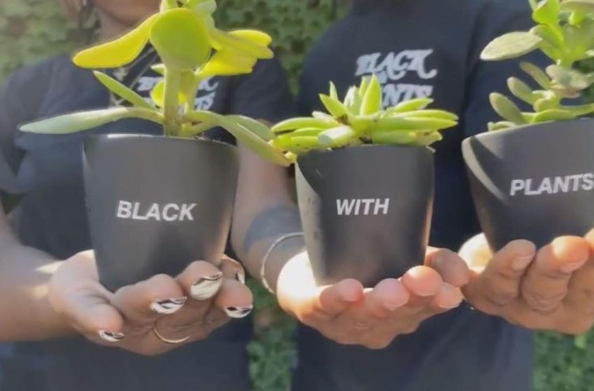 The Plant Economy is a growing business for man who wanted to bring Black representation into gardening