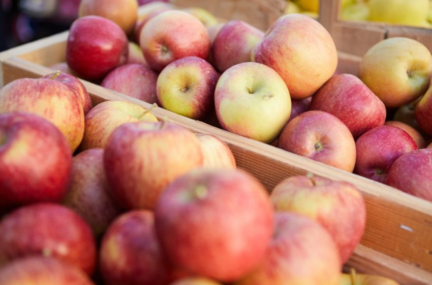 Boulder County Farmers Markets: At the Market: Apples deserve the limelight