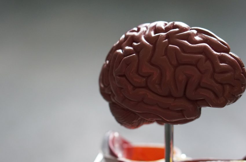 Powerful technology details the formidable elasticity of brain tumors