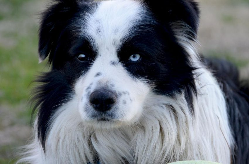 Buying a puppy in Australia: Sydney start-up PETspot finds way to stop pet scams